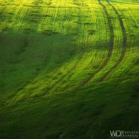 The green shapes by WojciechDziadosz