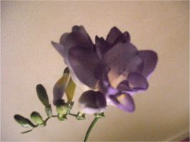 Shadowed Purple Freesia by EtherealGothica