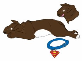 Mallard's Superman by 4dogowner