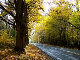 Autumn's road by beautythroughalens