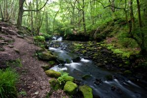 Harden Dell by crowthius