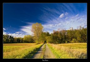 The Path by AndreasResch