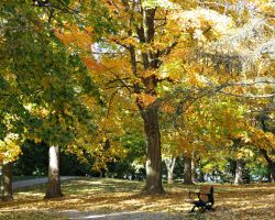Fall Scene... by Michies-Photographyy