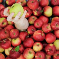 apple season - one in a million by Bucikah