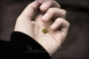 hand full of luck by Finvara