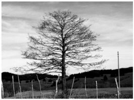Last leaves of a poisoned tree by bauhaus1812