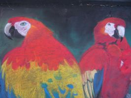 Parrots in chalk by Myrcury-Art