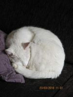 My Cat In Real! His name is ''Snoopy'' by Oushuu