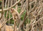 Monkey by BertLePhoto