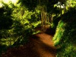 forest PathII by Digitalpremade
