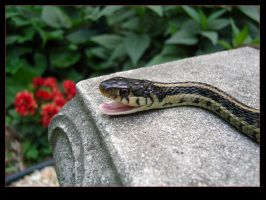 Snake by lizzys-photos