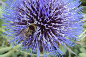 Thistle with bee by 13Forever13
