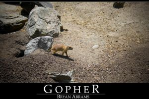 Gopher by dpbBryan