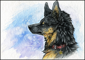 Fellow.:BlueSky:. by WhiteSpiritWolf