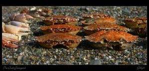 The Crab Graveyard by Gilly71
