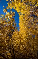 Spiraling fall colors by CheshirePhotographer