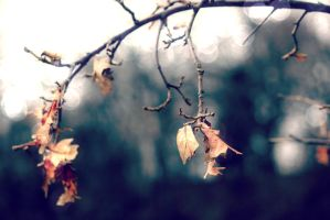 to the death we hang by fotomademoiselle