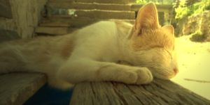 Sleeping Kitten 2 by Elvira15