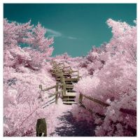 The Path Through Cotton Candy Land by IngoSchobert
