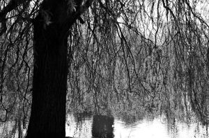 Weeping (mono) by johnwaymont