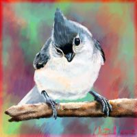 Titmouse by hydraa
