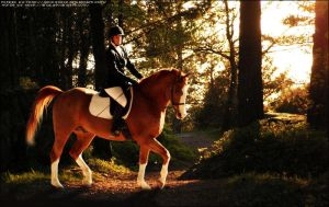 Perfect evening for Dressage by Impressive-Instant