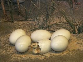 Ostrich baby coming out of egg by MihaelaJoeDesigns