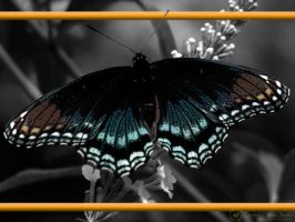 Butterfly wallpaper by Twitchy-Kitty-Studio