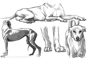 Dog studies by kalambo