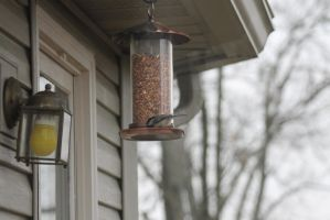 Birdfeeder by Winter-Flight
