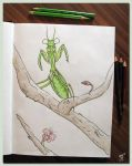 Pray Mantis by MonkeyFunkR