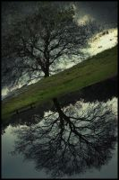Mirror tree ... by MOSREDNA