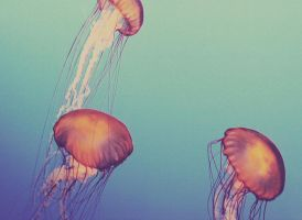 :Jelly's II: by ambersome