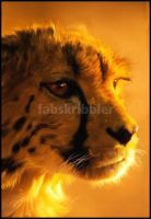 Portrait of a CHEETAH by fabfactor
