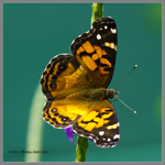 Autumn Colored Butterfly by Mogrianne