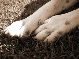 Grass and Paws 2 by Natsum-i
