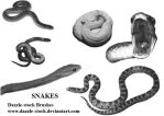 DS: Snake Brushes by dazzle-stock
