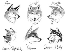 Canine heads doodle by kta1540