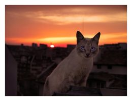 Cat on a Hot Tin Roof by TodorBozhinov