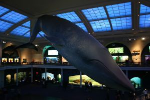 Blue Whale by wolfphotography