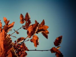Autumn by 5ROCKY5