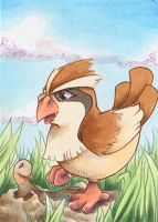 ACEO Taubsi / Pidgey Pokemon Pokedex Challenge by R-a-t-t-a-t-a