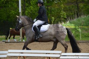 Pony dressage stock 2 by BRls-love-is-MY-Live