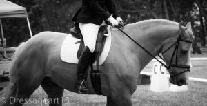dressage black and white by dressageart13