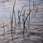 Les Herbes au Rivage III by hyneige