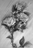 roses sketch by DariaGALLERY