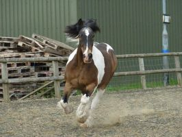 Equine Photos by Fantisized