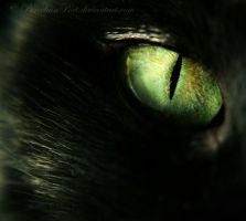 Midnight's Eye by PorcelainPoet