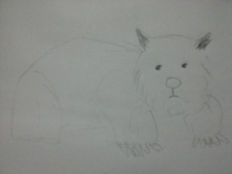 Wombat by Lythall