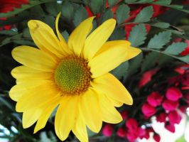 Yellow Daisy by looking-for-hope